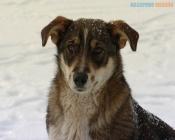 Глава Назарово потребовал, чтобы отлов собак осуществляли ежедневно