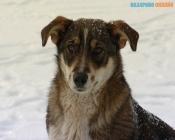 В городе Назарово отловили почти всех бездомных собак