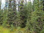В крае увеличат количество особо охраняемых территорий