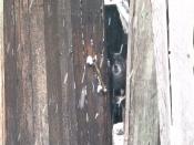 Назаровцев просят забрать собаку погорельцев в частный дом