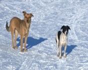 Спорткомплекс в городе Назарово очистят от собак в ближайшие дни