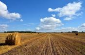 В Назаровском районе подвели итоги сельхозгода и поздравили тружеников аграрного комплекса