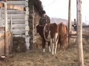 В Назаровском районе - житнице края, работает всего три фермера