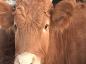 Ветеринарам и промышленникам на селе будут давать миллион рублей