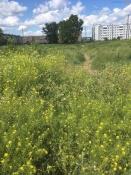 В городе Назарово начнется строительство нового жилья. Пустырь сдали в аренду