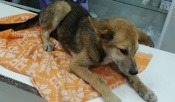 19 стерилизованных собак в год. Как такие меры могут изменить ситуацию в городе Назарово?
