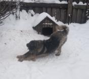 Собака на охрану