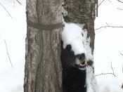 Полицейские попытаются найти хозяина задушенной на дереве собаки