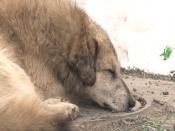 Назаровские полицейские могут стрелять собак. Но это крайние меры