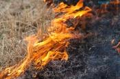 В этом году прогнозируют большое количество сильных лесных пожаров