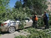 В городе Назарово один тополь повредил автомобиль, другой – перекрыл дорогу