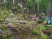 Могилы на кладбище города Назарово завалены поломанными деревьями (фото)