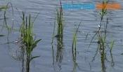 В Назаровском районе подросток спас двух девушек, но утонул сам