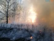 В Красноярском крае введен режим ЧС из-за лесных пожаров