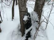 Назаровский живодёр за повешенную на дереве собаку пойдёт под суд