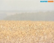 Назаровский агрохолдинг, несмотря на сложности, надеется на хороший урожай