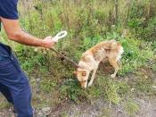 На улицах города Назарово появились бездомные собаки с чипами
