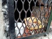 Халатность или живодёрство: в городе Назарово замуровали кошек