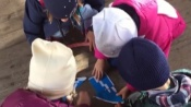 Более 500 дошкольников приняли участие в «Дорожной мозаике»