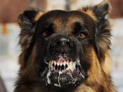 В соседней с нами территории выявили бешенство у собаки