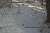 Охота на утку продолжается: неуловимую птицу пока так и не удалось спасти