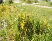 Город Назарово зарастает травой