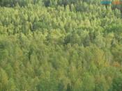 В Назаровском районе вновь потерялись грибники